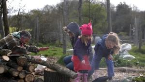 Forest Garden mushroom logs slider