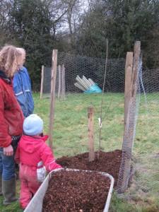 planted tree 2