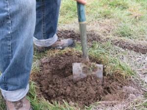 planting hole